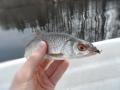 Ensimmäinen perho kalani