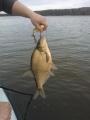 Kauden avaus kala, lahna jerkillä. Kai silläki tais olla kova nälkä. :)