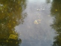 Joku älykääpiö oli viskannut auton akun jokeen... : ( ja jotain muutakin roinaa..