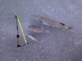 Päivän kalat