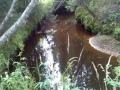 Salainen puro jossain korvessa.