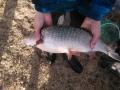 mikäs kala tässä on kysees, onko se säyne ?