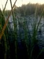 Aamukaste, verkot ja pieni puro Ruotsinmaalla Kiirunassa