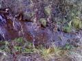 Samaa puroa vähän alempaa