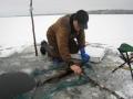 Järvi jäätyi ja niin alkoi talvinen verkkokalastus