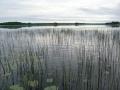 Kynäsjärvi