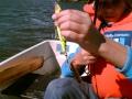 Kalamies on aina kalamies; tavasta tai saaliin koosta riippumatta!