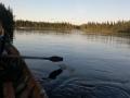 muonionjoki 2014