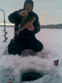 Mukavia ahvenia Norrbottenin metsälampareista!