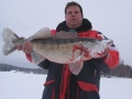 Markku Korhosen pilkki kuha 5.3kg