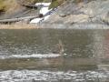 Toinen aamu uinnin harrastaja +2 asteisessa merivedessä..
