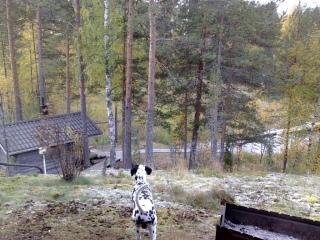 Saimaa 2010 Kesäkuu