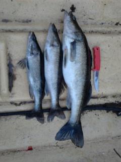 Oulujärvellä uistelemassa