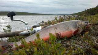 Torpedot Finnmarkissa