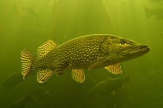 Kalastuskolmio