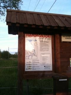 Hammonjoki