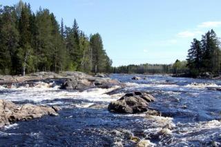 Kiimiginjoki