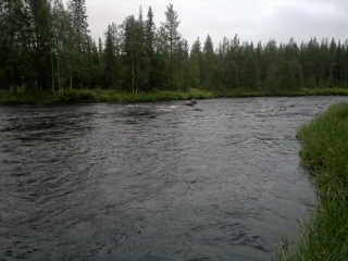 Meltausjoki