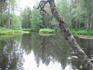 Piltuanjoki