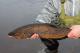 Tarkastele profiilia kalakaapo